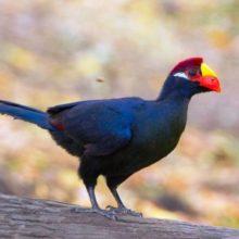 Птицы Бали