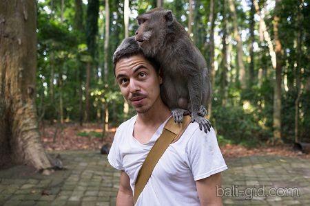 Лес обезьян Санге (Sangeh Monkey Forest, или Obyek Wisata Sangeh)