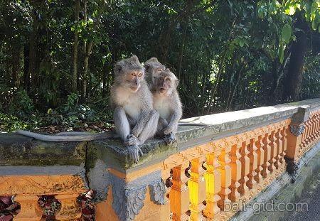 Лес обезьян на Бали - описание и фото